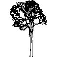 Tree 517