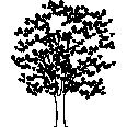 tree 518