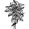 Tree 520