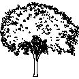 tree 531