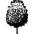 Tree 532