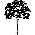 Tree 529