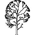Tree 525