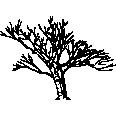 Tree 534