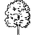 Tree 535