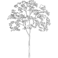 tree 539