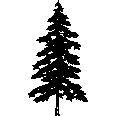 Tree 536