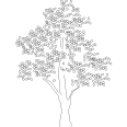 Tree 546