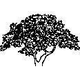 Tree 540