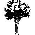 Tree 549