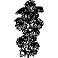 tree 558