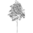 Tree 566