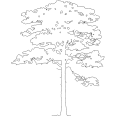 Tree 568