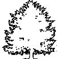 Tree 565