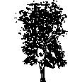 Tree 567