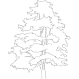 tree 571