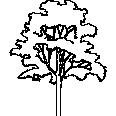 tree 580