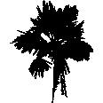 Tree 582