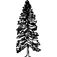 Tree 584