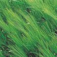 herb 06