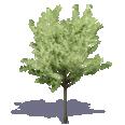 generic summer tree 4