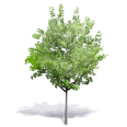 Generic Summer Tree 7