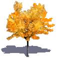 generic autumn tree 2