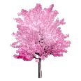 Cherry Flower Tree