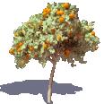 Orange Tree 3