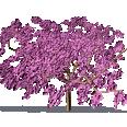 Cherry Plum, Myrobalan Plum
