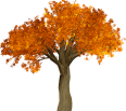 cutout autumn tree 1