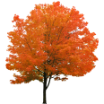 cutout autumn tree 4