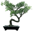 cutout bonsai tree
