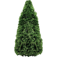 Image - Entourage - Fir Tree 1