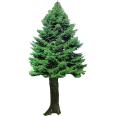 Cutout Fir Tree 4