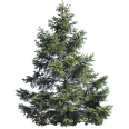 Image - Entourage - Fir Tree 17