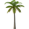 image - entourage - palm tree 2