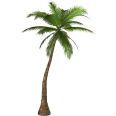 image - entourage - palm tree 5
