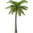 Image - Entourage - Palm Tree 6