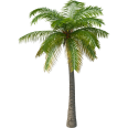image - entourage - palm tree 7