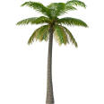image - entourage - palm tree 8