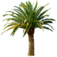 Image - Entourage - Palm Tree 9
