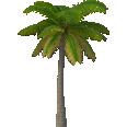 Image - Entourage - Palm Tree 11