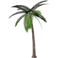 Cutout Palm Tree 12