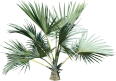 Image - Entourage - Palm Tree 14