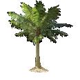 Image - Entourage - Palm Tree 16