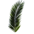 Image - Entourage - Palm Tree 17