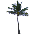 Image - Entourage - Palm Tree 18