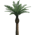 image - entourage - palm tree 19
