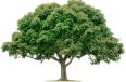 image - entourage - tree 4